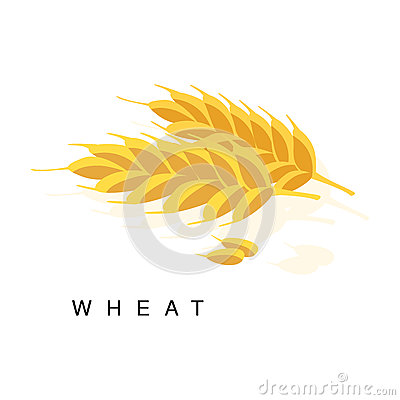 Wheat Ear, Infographic Illustration With Realistic Cereal Crop Plant And Its Name Vector Illustration