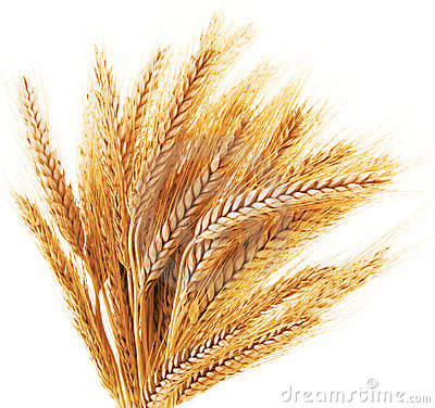 Free Wheat Ears Stock Images - 6051234
