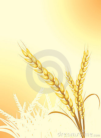 Wheat ears on the abstract background