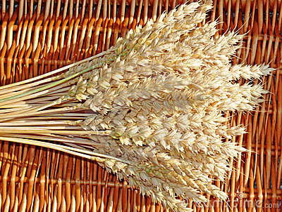 Wheat ears in a basket
