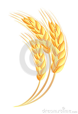 Free Wheat Ears Icon Royalty Free Stock Photo - 26199395