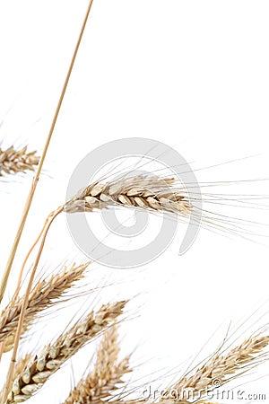 Wheat ears.