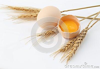Wheat, Egg with yolk
