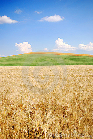 Free Wheat Field And Beyond Stock Image - 2743601
