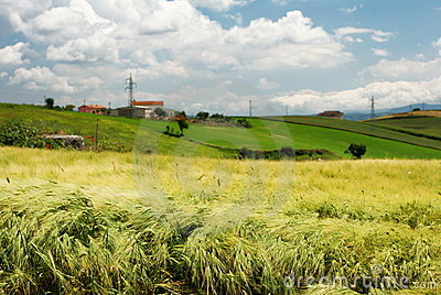 Wheat field and farmland