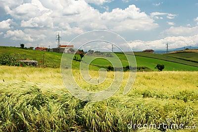 Wheat field and farmland
