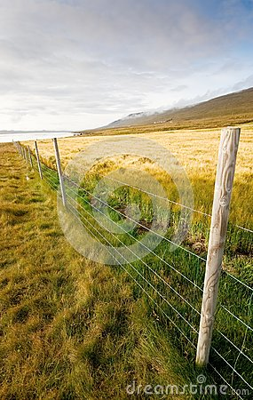wheat field with fence