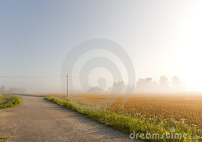 Wheat field in mist