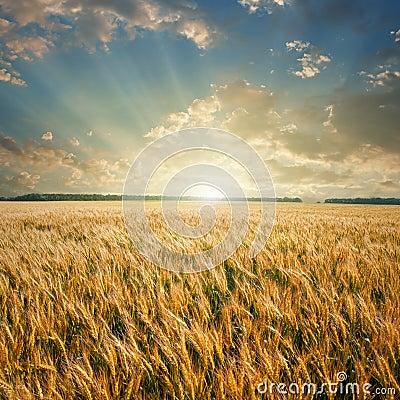 Free Wheat Field On Sunset Stock Photo - 16529880
