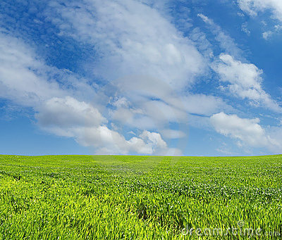 Wheat field over blue sky