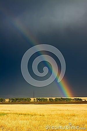 Wheat field and rainbow on cloudy sky