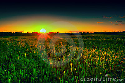 Wheat field at sunset, agriculture, landscape