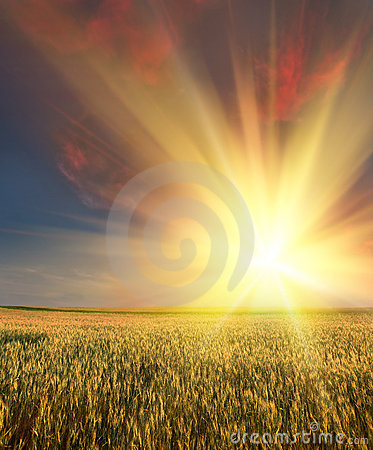 Free Wheat Field With Sunset Royalty Free Stock Photo - 17850315