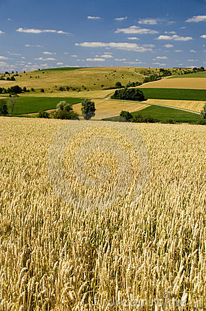 Free Wheat Fields Royalty Free Stock Photos - 2037488