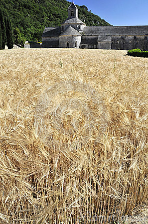 Wheat fields at the Abbey of Senanque, France