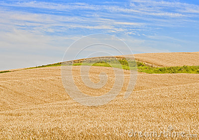 Wheat Fields, Palouse Washington