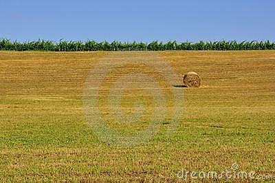 Wheat fields of rural Tuscany, Italy