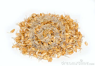 Wheat Germs