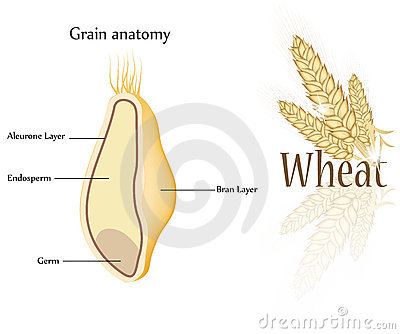 Wheat and grain