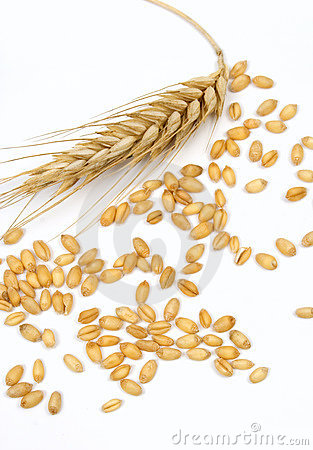 Wheat grain and ear isolated on white
