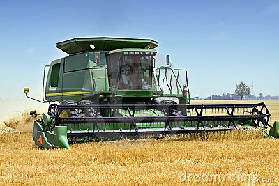 Wheat Haresting