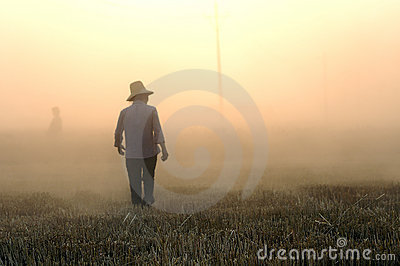 Wheat harvest Editorial Stock Photo