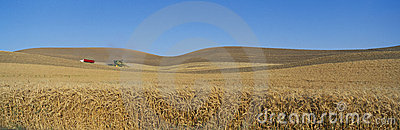 Wheat Harvest,