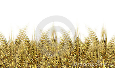 Wheat harvest horizon