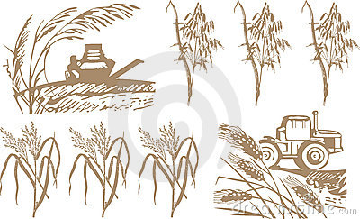 Wheat, harvest and machinery