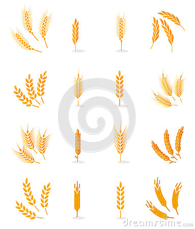 Free Wheat Isolated On White Background. Royalty Free Stock Photography - 90085737