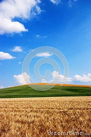 Wheat and oat fields