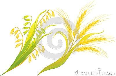 Wheat and oats ears