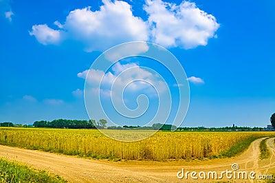 Wheat plant meadow