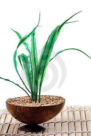 Wheat plant in wheat