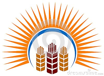 Wheat ripe with sun