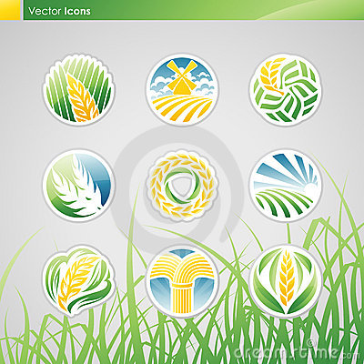 Wheat and rye. Vector logo template set.