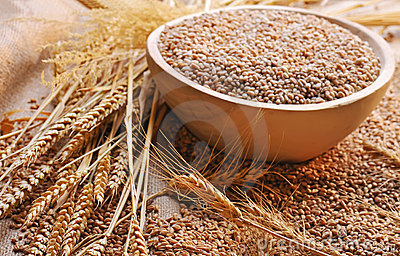Wheat seeds on rough material
