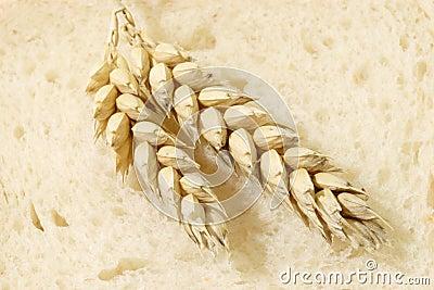 Wheat on Toast