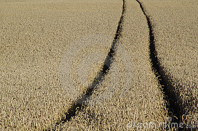 Wheat track