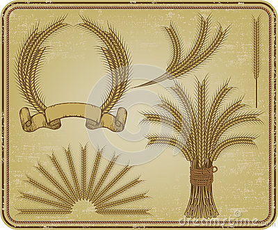 Wheat, a vintage set. Vector illustration.