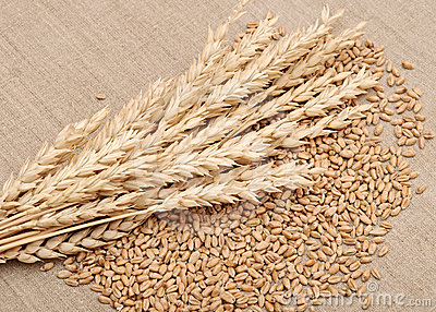 Wheat and wheat-ears