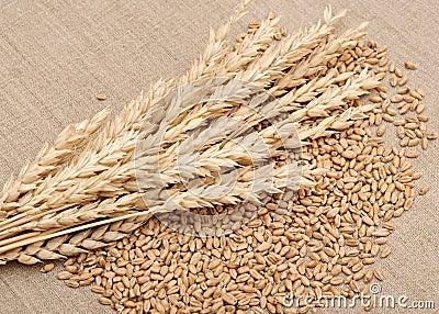 Wheat and wheat-ears