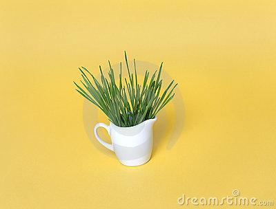 Wheatgrass  in souce cup