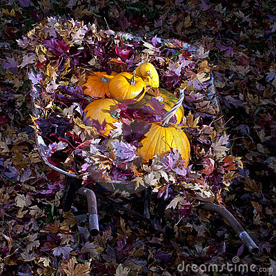 Wheel Barrel full of leaves and pumpkins