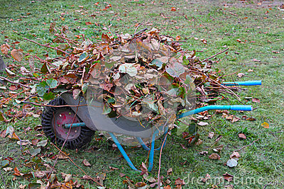 Wheel barrow with cutted branches and leaf litter rear view