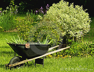 Wheelbarrel and garden
