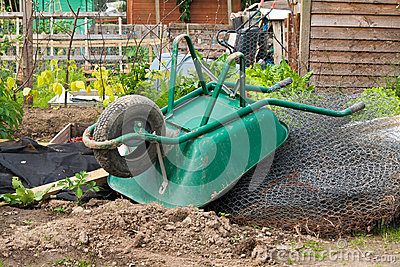 Wheelbarrow on allotment