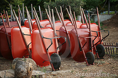 Wheelbarrows in garden