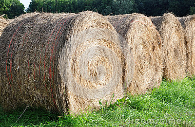 Wheels of straw on the field