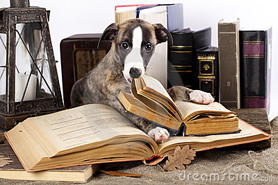 Whippet and book